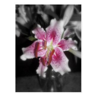 stargazer lilies #3 postcard