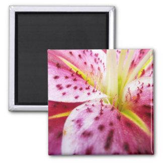 Stargazer Lily Bright Magenta Floral Square Magnet