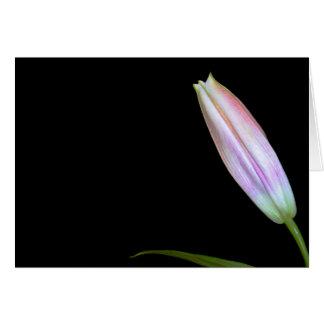 Stargazer Lily Bud Greeting Card