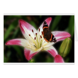 Stargazer Lily With Butterfly Card