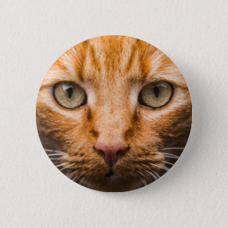 Staring Cat buttons