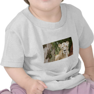 Staring Lioness T-shirt
