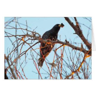 starling at sundown greeting card