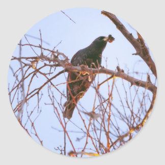 starling sundown round sticker