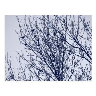 Starlings in a Tree Postcard