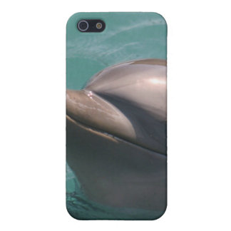 Starring a Dolphin iPhone Case Cover For iPhone 5