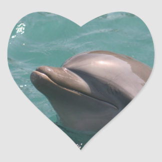 Starring a Dolphin Stickers