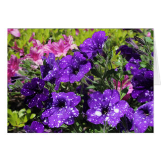 Starry Night Petunia flower greeting card