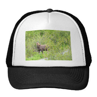 Startled Young Moose Cap