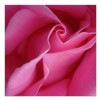 Starts at $12.80 Diagonal of Pink Rose Wall Decor Poster
