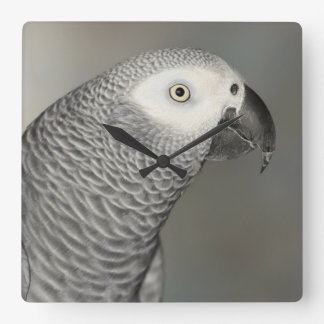 Stately African Grey Parrot Square Wall Clock