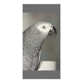 Stately African Grey Parrot Photo Cards