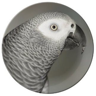 Stately African Grey Parrot Porcelain Plate