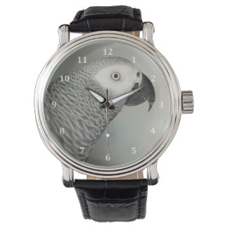 Stately African Grey Parrot Watches