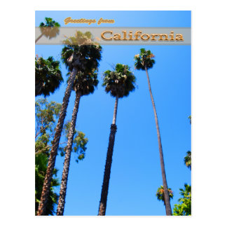 Stately Palm Trees Postcards