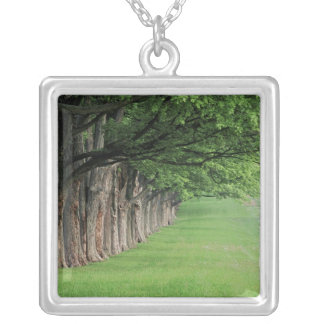 Stately row of trees, Louisville, Kentucky. Square Pendant Necklace
