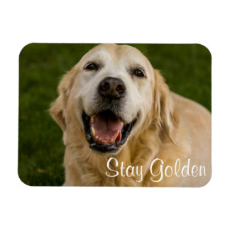 """Stay Golden"" Golden Retriever Magnet"