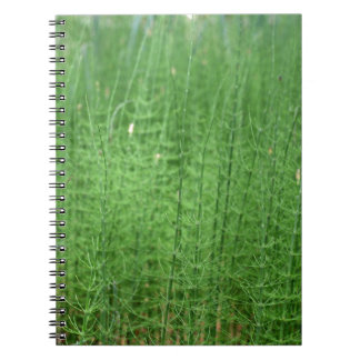 Steams of water horsetail notebooks