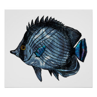 Steel Blue Tropical Butterfly Fish Poster