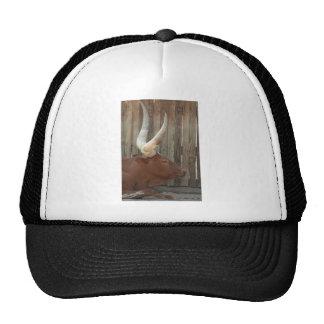 Steer With Big Horns Mesh Hats
