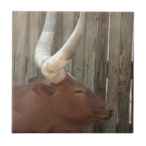 Steer With Big Horns Tiles
