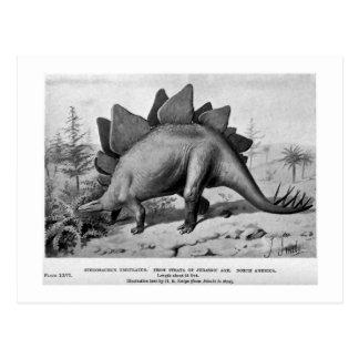 Stegosaurus ungulatus art postcard
