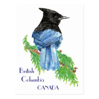 Stellar Jay, British Columbia, Bird, Nature Postcard