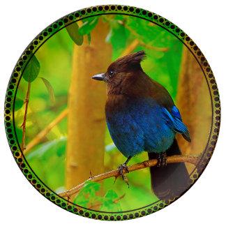 Stellar Jay Plate