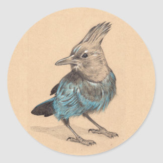 Stellar's Jay Classic Round Sticker