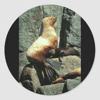 Steller Sea Lion and Pup Classic Round Sticker