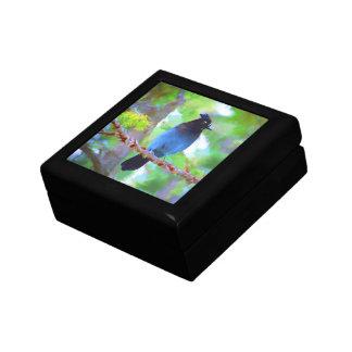 Steller's Jay Gift Box