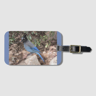 Steller's Jay Luggage Tag