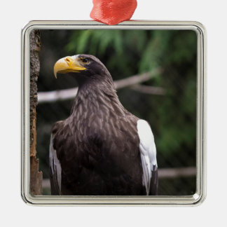 Steller's Sea Eagle Metal Ornament