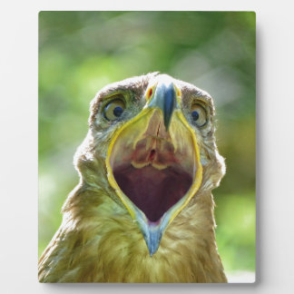 Steppe Eagle Head 001 2.1 Plaque