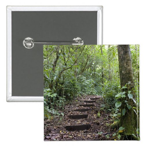 Steps ascending on path. Tropical Cloud Forest Pinback Buttons