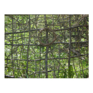 Stick Fence Postcard