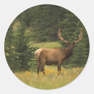 sticker - Elk