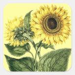 Sticker Heirloom Sunflower Botanical Floral Flower