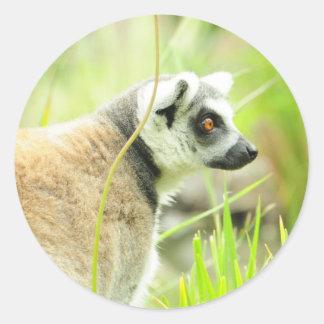 Sticker-Lemur- Ring Tailed Round Sticker