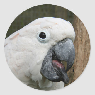 Sticker Moluccan Cockatoo sticking his tongue out