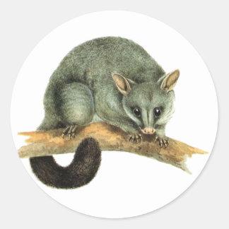 Sticker Sheets - cooroy possum