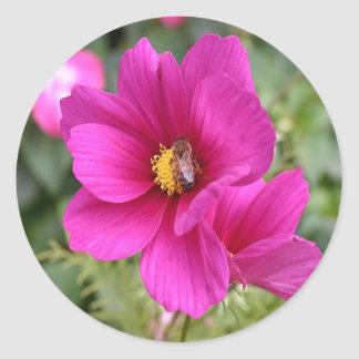 Sticker sporting Pink Cosmos with a wasp