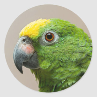Sticker with yellow headed Amazon green parrot