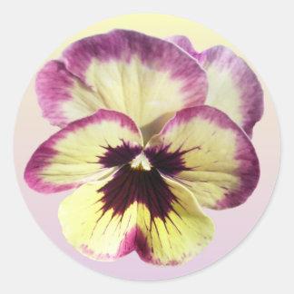 Stickers - Burgundy Blotch Pansy