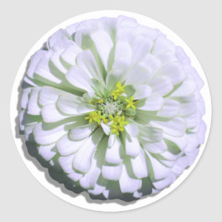 Stickers - Lemony White Zinnia