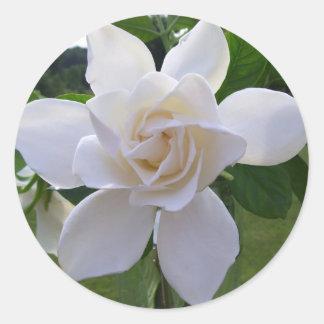 Stickers - Naturally Gorgeous Gardenia