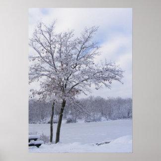 Sticky Snow 24 ~ print