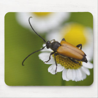 Stictoleptura rubra mouse pad