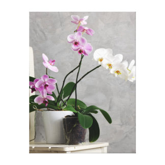 Still life with orchids canvas print