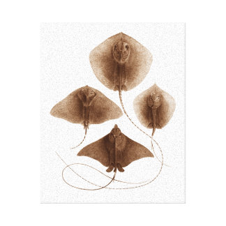 Stingray #2 Wrapped Canvas Wall Art Canvas Prints